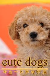 cute dogs02 トイプードル