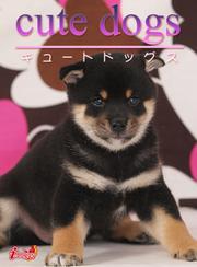 cute dogs08 柴犬