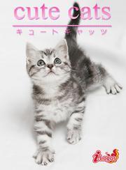 cute cats03 アメリカンショートヘア