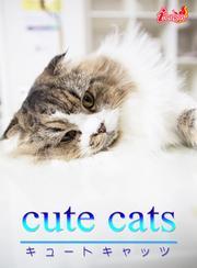 cute cats06 マンチカン