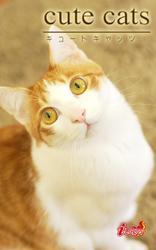 cute cats18 日本猫