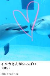 イルカさんがいっぱいpart.1