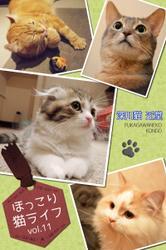 ほっこり猫ライフ vol.11