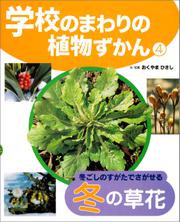 学校のまわりの植物ずかん 冬ごしのすがたでさがせる冬の草花