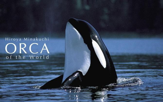 オルカ Orca of the World