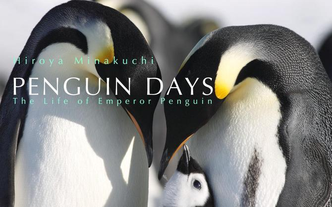 コウテイペンギン Penguin Days--The Life of Emperor Penguin