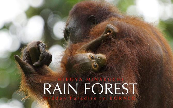 熱帯雨林 Rain Forest--Hidden Paradise in Borneo