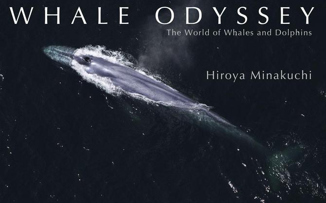ホエールオデッセイ WHALE ODYSSEY--The World of Whales and Dolphins