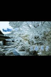 京都異景 vol.2