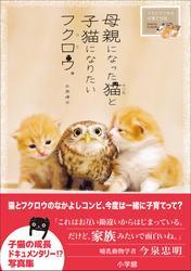 母親になった猫と子猫になりたいフクロウ。~フクとマリモの子育て日記~