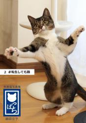 保護猫写真集 ねこっぱち! (2) #転生しても猫