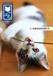 保護猫写真集 ねこっぱち! (3) #遊ぶのが仕事です