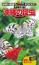沖縄の昆虫